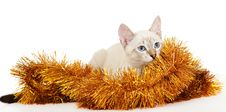 Free Thai Kitten In Christmas Tinsel. Royalty Free Stock Photography - 16652747