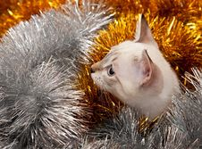 Free Thai Kitten In Christmas Tinsel. Royalty Free Stock Photos - 16652888
