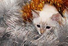 Free Thai Kitten In Christmas Tinsel. Royalty Free Stock Photography - 16652927