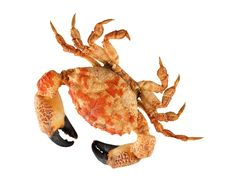 Free Crab Stock Images - 16653304