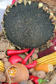Free Autumn Harvest Stock Photography - 16653572