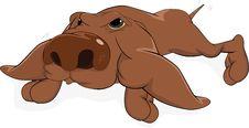 Free Impudent Dog Stock Photos - 16654243