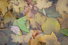 Wet Autumn Leaves Background Stock Photos