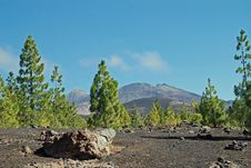 Free Tenerife Royalty Free Stock Photography - 16654607