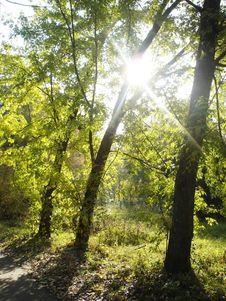 Free Autumn Park. A Sunlight. Stock Photo - 16655810