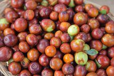 Free Olives Royalty Free Stock Image - 16655886