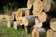 Pile Of Woods Stock Images