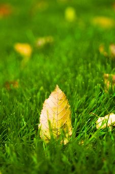 Free Autumn Leaves On  Green Grass Stock Photos - 16656863