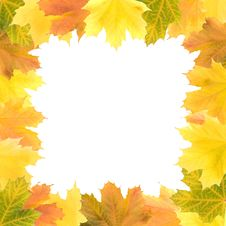 Square Frame Of Maple Leaves Stock Photo