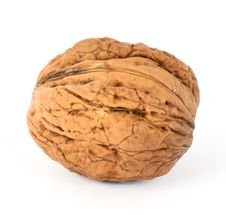 Free Walnut Stock Photo - 16657130