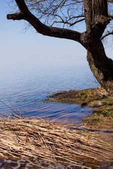 Free Tree By The Lake Stock Photography - 16658842