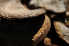 Free Group Of Mushrooms Stock Photography - 16659742
