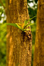 Free Medium Trees Bud Field. Stock Photos - 16667613
