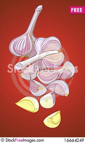 Free Garlic Royalty Free Stock Images - 16664249