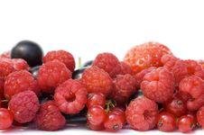 Free Garden Ripe Berries Isolated Stock Photos - 16663903