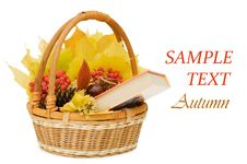 Free Autumn Leaves And Fruits Stock Photos - 16664263