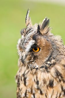 Free Owl Stock Photography - 16666942