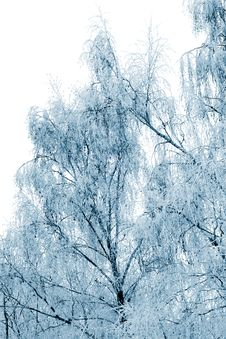 Free Winter Trees Covered With Snow Royalty Free Stock Images - 16667129