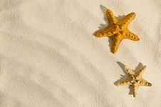 Free Starfish Royalty Free Stock Photography - 16667137