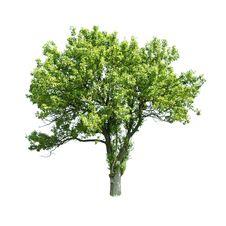 Free Tree Stock Image - 16667161
