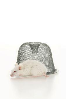 Free Mouse. Royalty Free Stock Photos - 16668398
