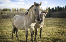 Free Wild Horses. Royalty Free Stock Images - 16669289