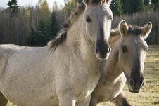 Free Wild Horses. Royalty Free Stock Image - 16669316