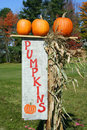 Free Pumpkins With Sign Stock Image - 16675441