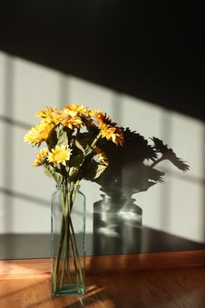Free Sunflower Stock Images - 16670064