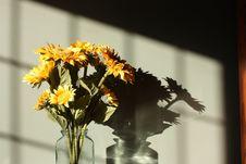 Free Sunflower Stock Photos - 16670073