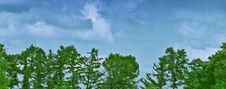 Free Trees Stock Image - 16670141