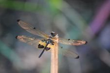 Free Dragonfly Royalty Free Stock Image - 16670646