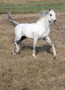 Free Horse Royalty Free Stock Photo - 16670835