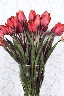 Free Red Tulips Stock Photography - 16671672
