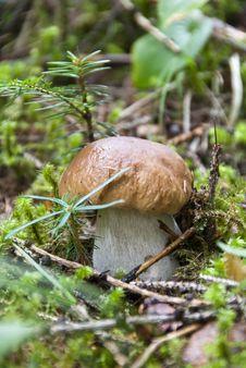 Free Boletus Mushroom, Dolomites Stock Photo - 16672050