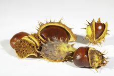 Free Autumn Fruits Stock Image - 16672141
