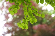Free Backlit Green Leaves Stock Photos - 16672593