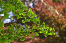 Free Backlit Green Leaves Stock Photo - 16672620