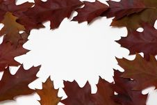 Free Red Oak Leaves Stock Images - 16673524