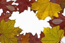 Free Foliage Stock Photos - 16673563