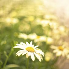 Free Flowers Background Royalty Free Stock Photos - 16673878