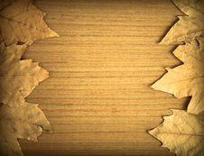 Free Autumn Background Royalty Free Stock Photos - 16674068