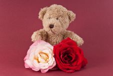 Free Teddy With Roses Royalty Free Stock Photography - 16674087