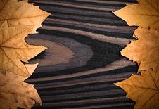 Free Autumn Background Stock Photography - 16674162