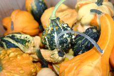 Free Orange, Green, Yellow Gourds With Stems Royalty Free Stock Photos - 16675368