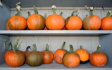 Free Pumpkins On Shelves Stock Photo - 16675410
