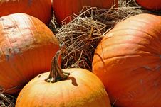 Free Orange Pumpkins In Hay Stock Photo - 16675430