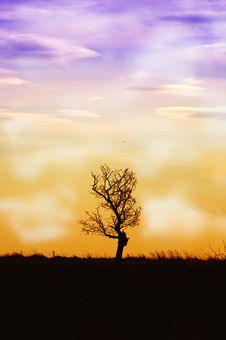 Free Solitary Tree Royalty Free Stock Photo - 16675715