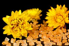 Free Dried Flowers. Royalty Free Stock Image - 16676046