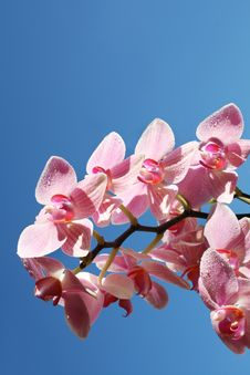 Free Orchids In The Sky Royalty Free Stock Images - 16677759